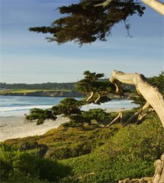 Spencer's Tree Service arborists give you a view of Carmel Beach, a view of the ocean, and trim Cypress Trees for a view.